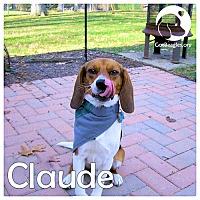 Adopt A Pet :: Claude - Pittsburgh, PA