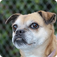 Adopt A Pet :: Peggy - Grants Pass, OR