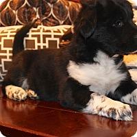 Adopt A Pet :: Rubix - Los Angeles, CA