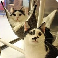 Adopt A Pet :: Danny and Austin - Louisville, KY