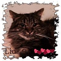 Adopt A Pet :: Lio - Harrisburg, NC