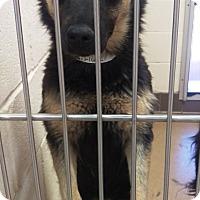 Adopt A Pet :: Skye - Las Vegas, NV