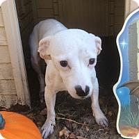Adopt A Pet :: Snow - Tavares, FL