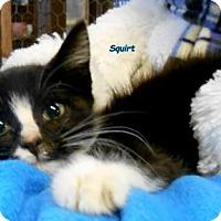 Adopt A Pet :: Squirt - Oskaloosa, IA