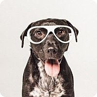 Adopt A Pet :: Raquel Welch - Houston, TX