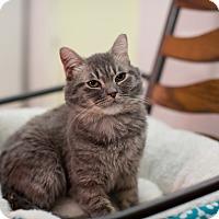 Adopt A Pet :: Leilani - Phoenix, AZ