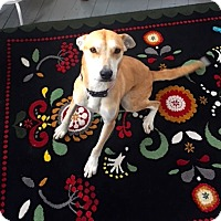 Adopt A Pet :: Peanut - Buffalo, NY