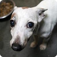 Adopt A Pet :: Morgan - Versailles, KY