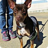 Adopt A Pet :: Wayne - McKinney, TX