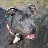 Adopt A Pet :: Lira - Gainesville, FL