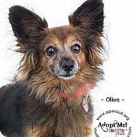 Adopt A Pet :: Olive - Phoenix, AZ