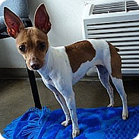 Adopt A Pet :: Ruby Red - Oklahoma City, OK
