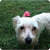 Adopt A Pet :: Mo - Nashville, TN