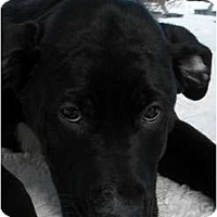Adopt A Pet :: Cole - Rigaud, QC