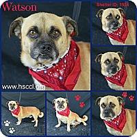 Adopt A Pet :: Watson - Plano, TX