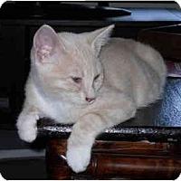 Adopt A Pet :: Uno - Davis, CA