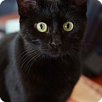 Adopt A Pet :: **Dimples** - St. Louis, MO
