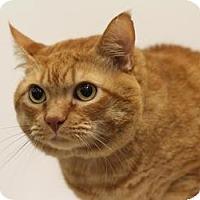 Adopt A Pet :: Josephine - Sacramento, CA