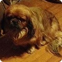 Adopt A Pet :: Willie - Portland, ME
