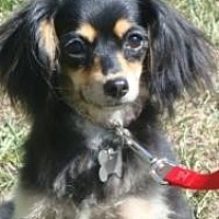 Adopt A Pet :: Nina - VIDEO! - Sherman Oaks, CA