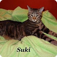 Adopt A Pet :: Suki - Bentonville, AR