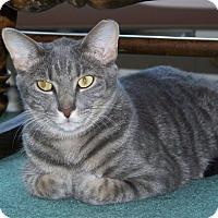 Adopt A Pet :: Rocco (CP) - Carlisle, PA