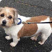 Adopt A Pet :: Buffy - Oak Ridge, NJ