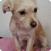 Adopt A Pet :: Marie - Stockton, CA