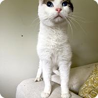 Adopt A Pet :: Harty - Addison, IL