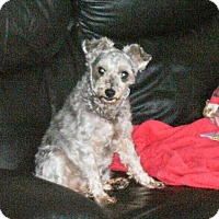 Adopt A Pet :: Molly 3378 - Toronto, ON