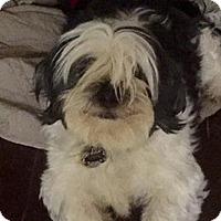 Adopt A Pet :: Walter - Sunnyvale, CA