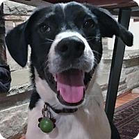 Adopt A Pet :: Eddie - Grafton, WI