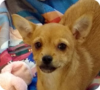 Terrier (Unknown Type, Small) Mix Puppy for adoption in Buena Park, California - Treasure