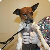 Adopt A Pet :: Romeo - Wildomar, CA