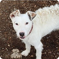 Adopt A Pet :: ROW ROW - Red Bluff, CA