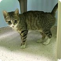 Adopt A Pet :: Hope - Janesville, WI