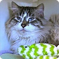 Adopt A Pet :: Pumpkin Pie - Duluth, MN