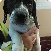 Adopt A Pet :: Frosty~ meet me! - Glastonbury, CT