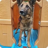 Adopt A Pet :: Princess - Louisville, KY