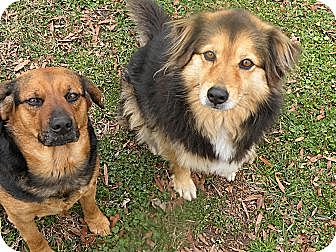 Beagle Mix Dog for adoption in Concord, North Carolina - Daisy