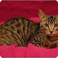Adopt A Pet :: Mason - Sacramento, CA