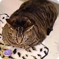 Adopt A Pet :: Bennie - Chesterland, OH