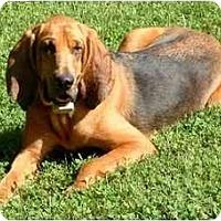 Adopt A Pet :: Sadie - Carrollton, GA