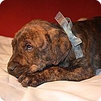 Adopt A Pet :: Cassius Clay - Hagerstown, MD