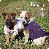 Adopt A Pet :: Chance - Flowery Branch, GA