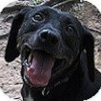 Adopt A Pet :: Clifton - Hamilton, ON