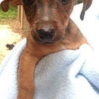 Adopt A Pet :: Cole - Foster, RI