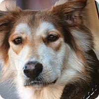 Adopt A Pet :: JAX VON JULICH - Los Angeles, CA