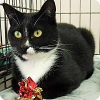 Adopt A Pet :: Sugar - Lincolnton, NC