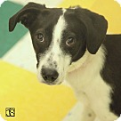 Adopt A Pet :: Olive
